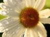 dew-dipped-flower_std