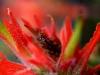 dewy-grasshopper_std