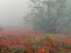 misty-wildflowers_std