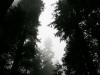 through-the-mist_std